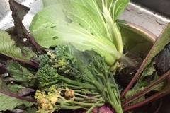 今日の収穫1